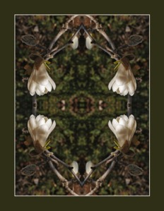 The Tulip Magnolia rug was the first image in the series, Ozark Mandalas.