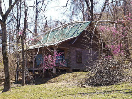 An ice severed Sycamore still lies upon a cabin near Ponca Arkansas. The trees around Mt View, Harrison and Jasper look like a war zone from the aftermath of  the past winter's ice storms.