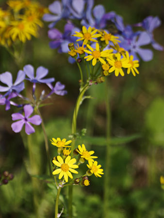 A bouquet of spring wild flowers