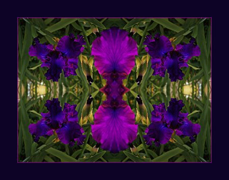 A Royal Iris Mandala photographed at Bob and Sue's in Hartville, MO