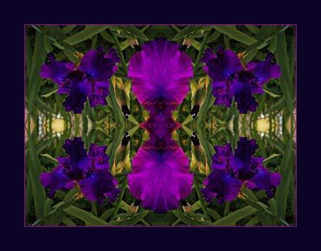 A Royal Iris Mandala photographed at Bob and Sue's in Hartville, MO