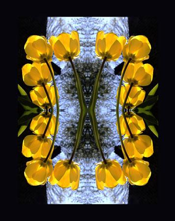 A Tulip Mandala