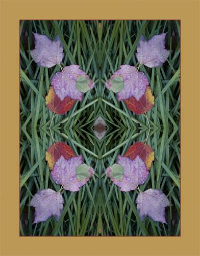 Monkey Grass Mandala