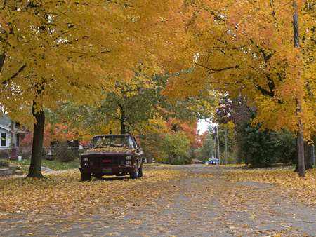 The autumn leaves painted the streets around Missouri State University.