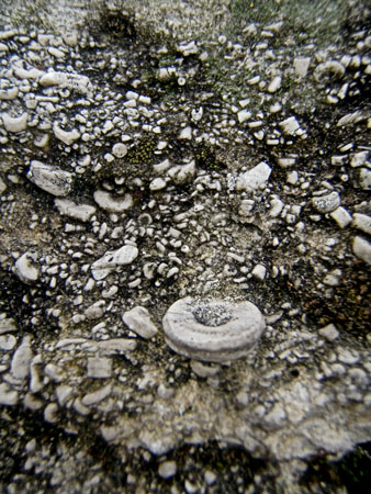 Have you ever looked at the surface of Karst Limestone? Imagine the midwest lying beneath the ancient seas.