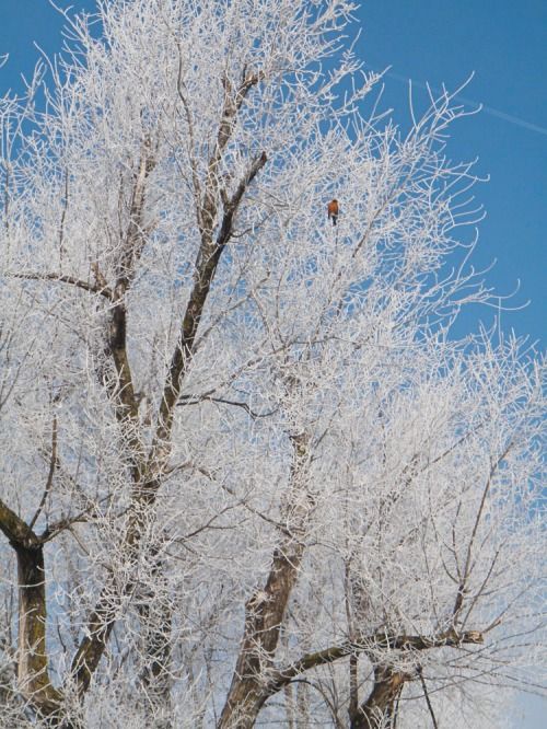 A frozen fog composition in white, blue and orange