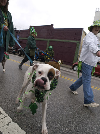 The boxer rebellion at this years St Pat's parade.