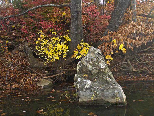 Fall on Lake Springfield