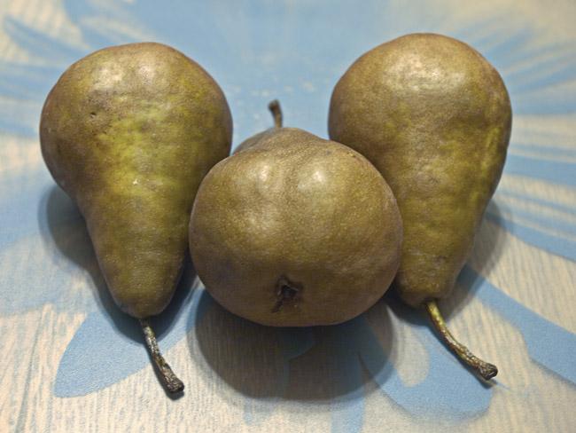 Three Bosc Pears