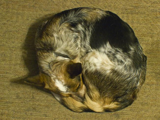A circular B.B. (Bobbi Barker)