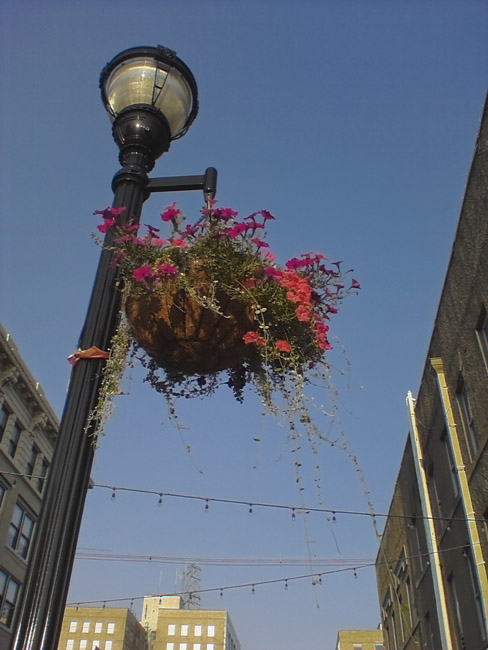Petunias swayed in the evening breeze
