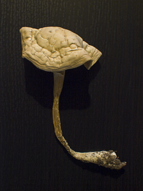 A withered Mushroom