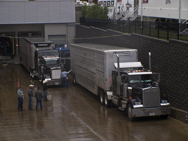 Waiting to unload the Bulls