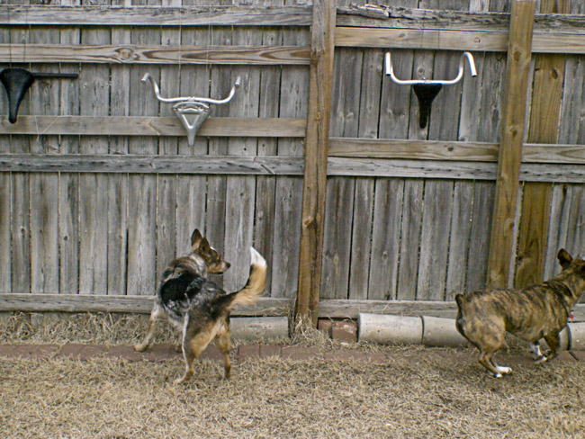 B.B. and Shelvin chased and played with Prince from the other side of the fence