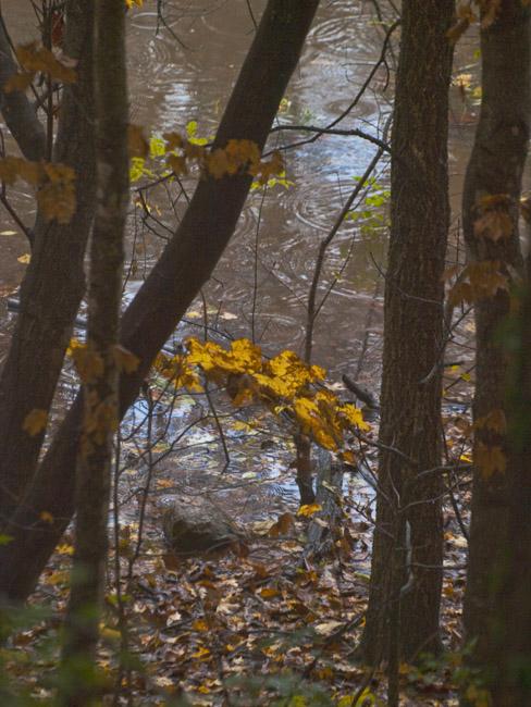 A fall jewel on Lake Springfield