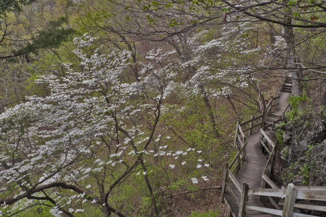 The 316 Steps of Spring Trail  at Ha Ha Tonka State Park