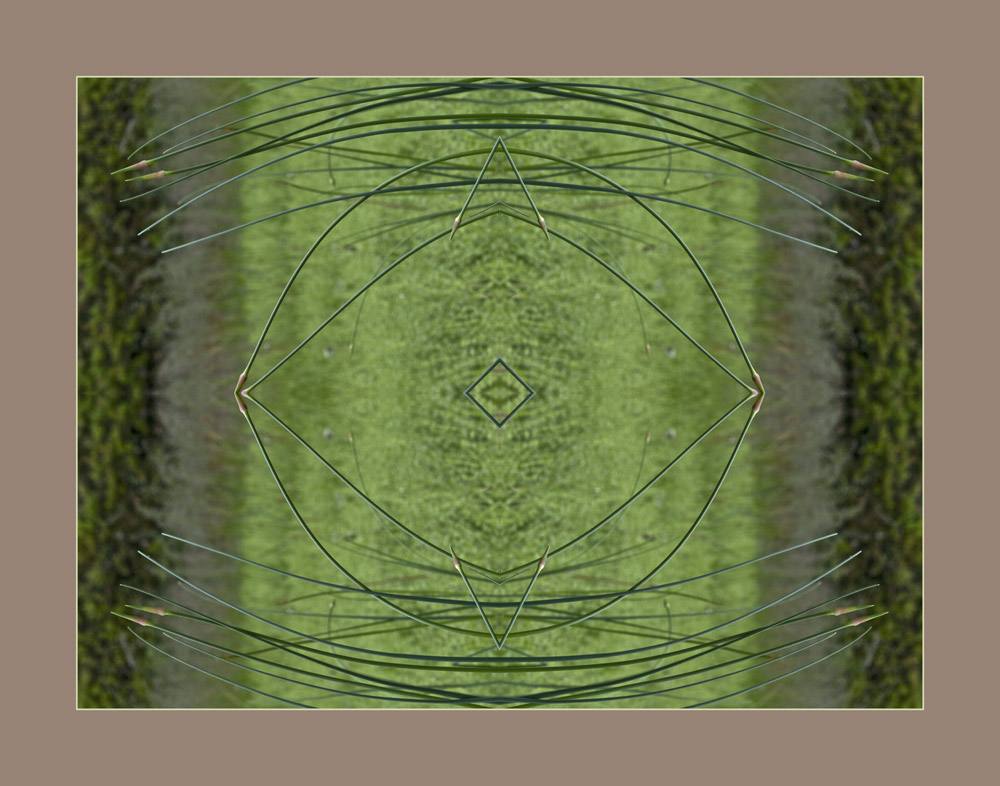 Wild Chives of Heather's Prairie, an Ozark Mandala