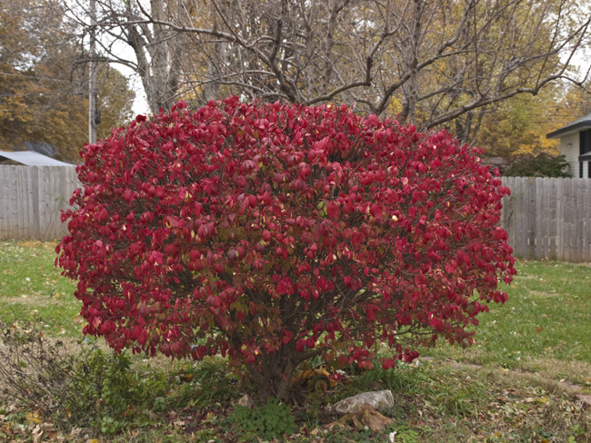The burning bush is on fire