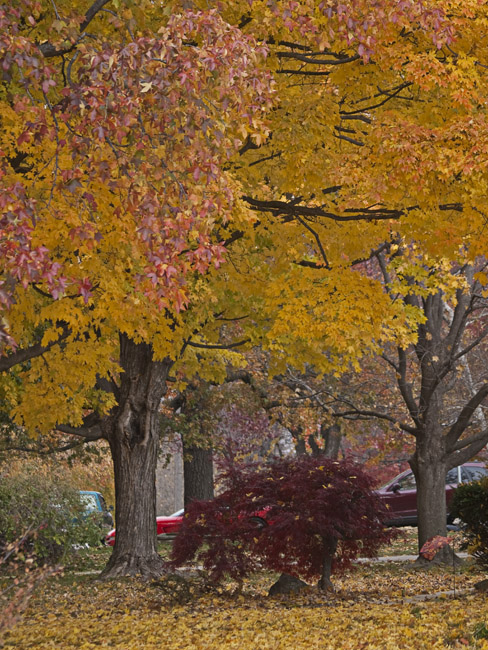 2014 Autumn postcard in the Village Green subdivision