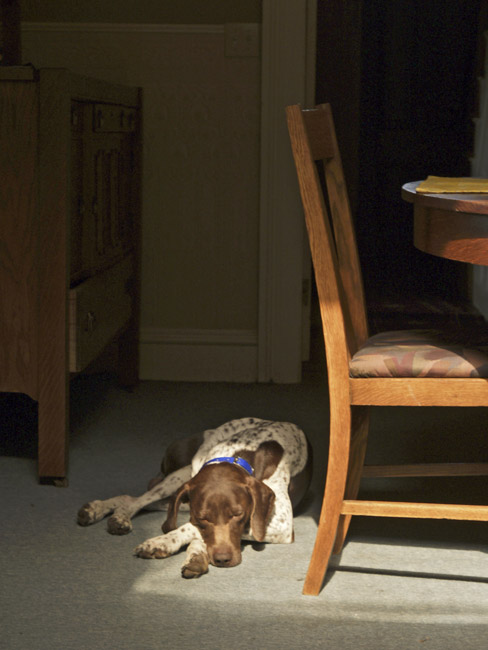 Mike the German Shorthaired Pointer, circa 2004