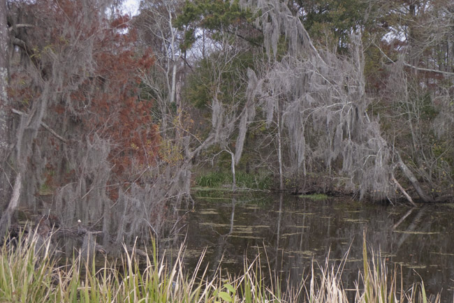 It's December and it's fall in the Louisiana bayou