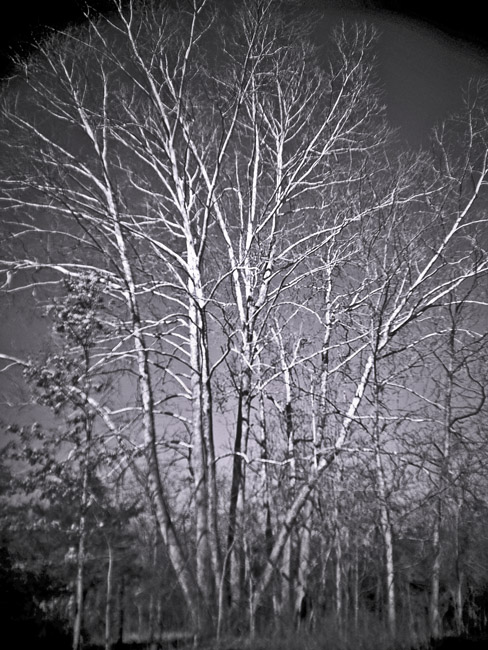 The bleached limbs of a Sycamore in winter at Busiek State Park, a Digital Diana landscape