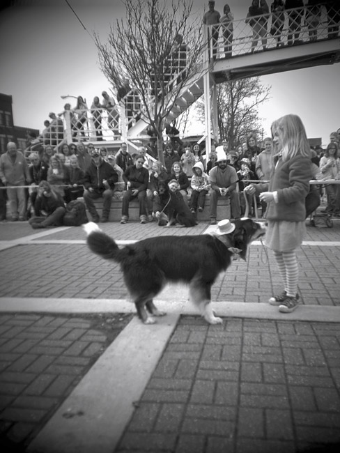 Mia and Jack the Australian Shepherd took third place in the Irish dog contest.
