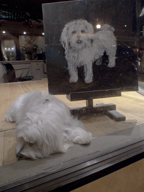 White doggy in the window