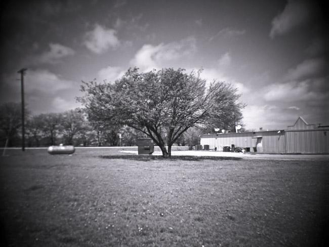 Texas Tree, 100 Days of the Mundane