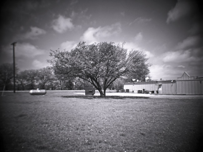 Texas Tree, 100 Days of the Mundane