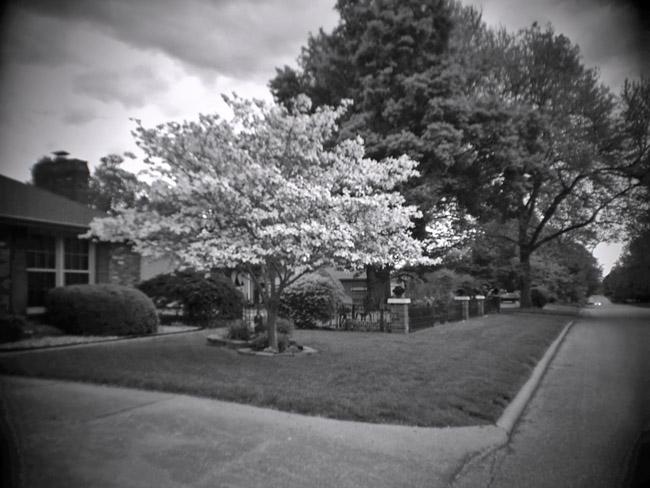 Dogwood Tree, 100 Photographs of the Mundane
