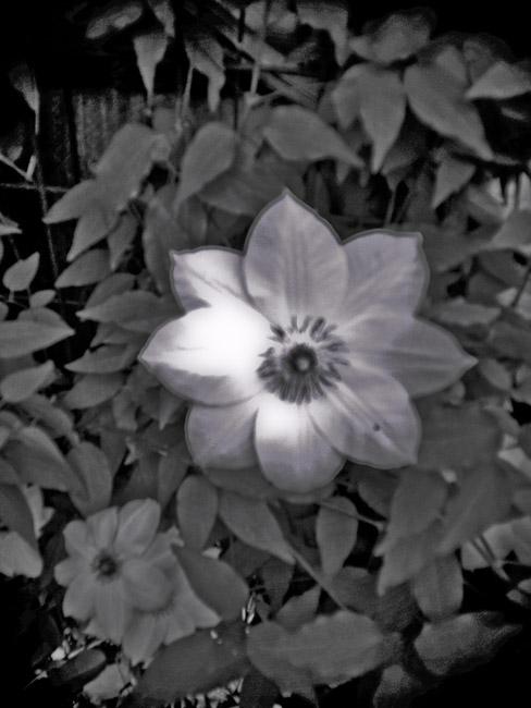 Flower at Dusk, 100 Photographs of the Mundane