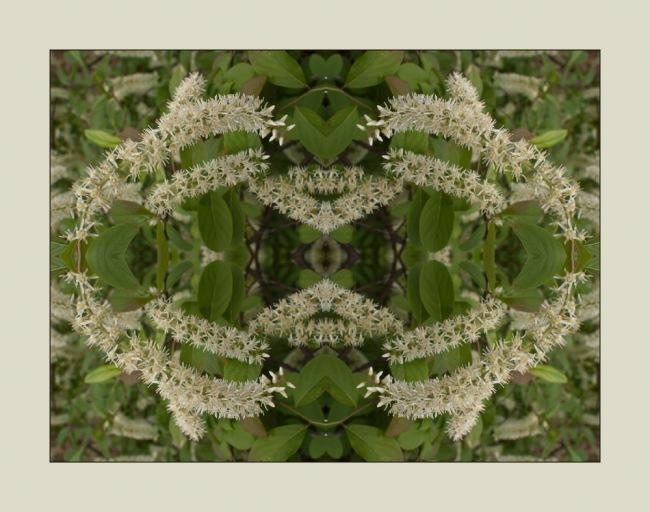 Spring Bush Mandala