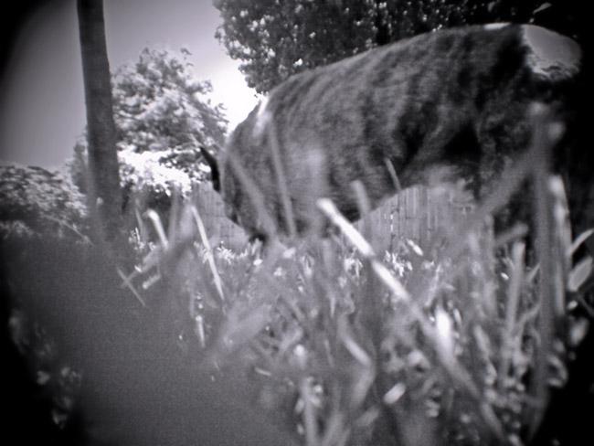 Grass Fed Dog, 100 Photographs of the Mundane