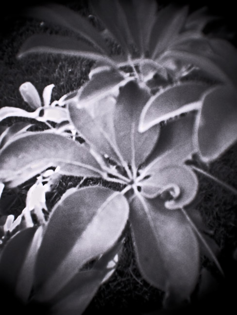Ficus, 100 Photographs of the Mundane