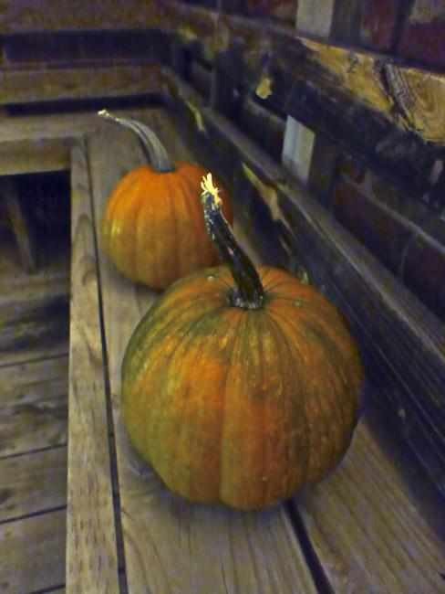 Pumpkins lit by the light of the romantic Florescent bulb