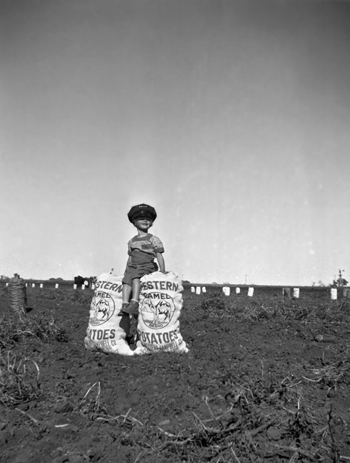 Family Photos - My mother Eileen sat on a sack of Camel potatoes in a farmers field in Hastings, Nebraska, circa 1939