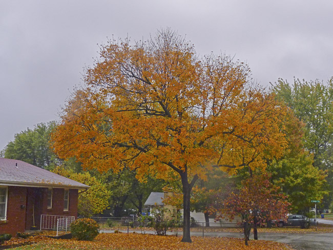 A rainy fall day in Parkcrest