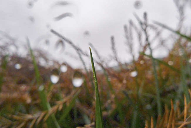 A Blade of Grass and Bald Cypress Leaves
