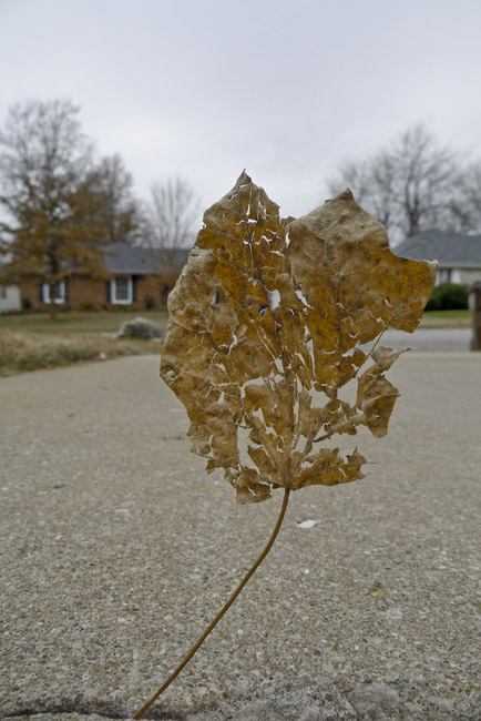 The withered and battered leaf sail