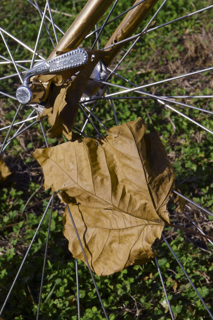 Bicycle Spokes and Fallen Leaf