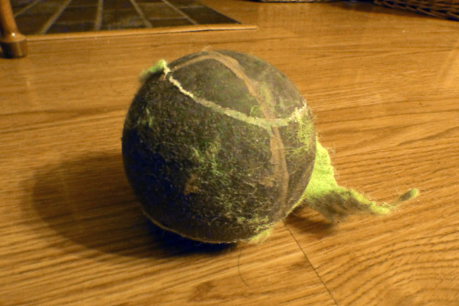 Shelvin's noisy tennis ball