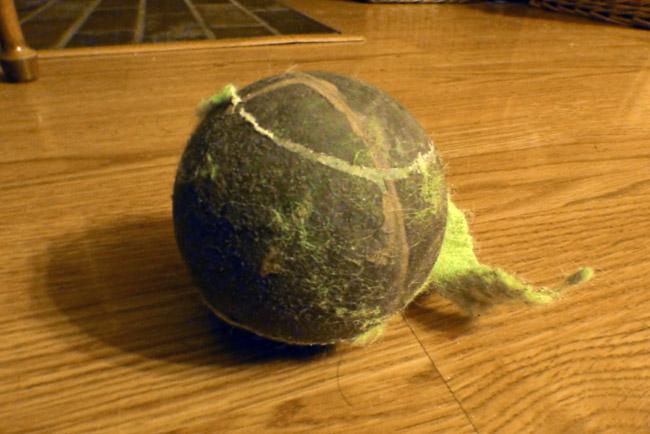 Shelvin's noisy tennis ball