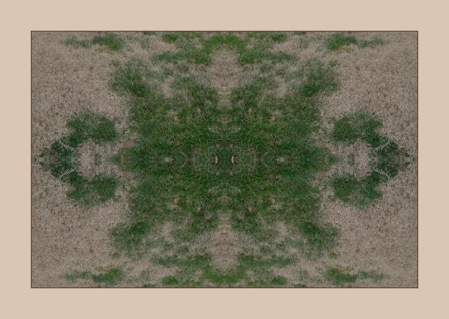 A backyard mandala of Bermuda and Blue Grass