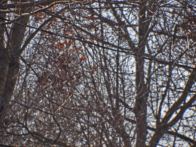 Bare Trees, homage to Eliot Porter and Fleetwood Mac