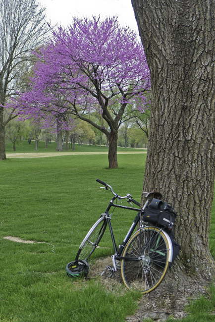 Redbud in bloom and an old black Schwinn