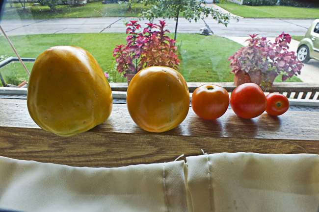 Tomatoes on the kitchen window sill