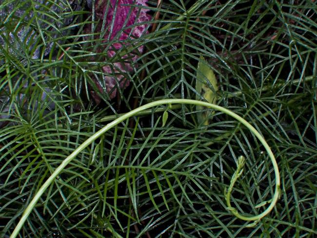 Still-life with vine