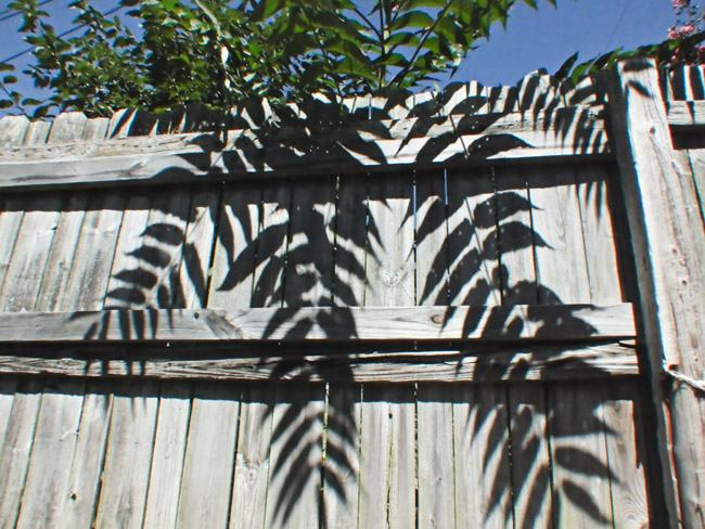 The leaf shadowed fence
