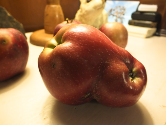 Siamese Apple Twins